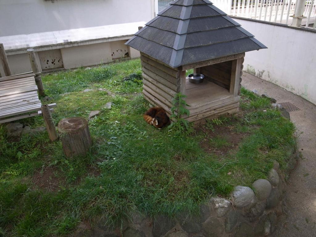 大崎公園 子供動物園 レッサーパンダ